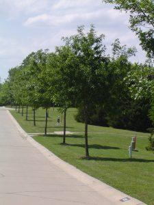 Park Place, Rockwall, Texas, Neo Traditional Homesites, Custom Built Homes, home sites
